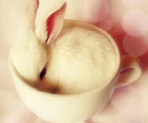 animal, bunny, and cup image