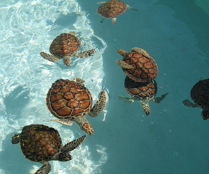 animals, ocean, and turtles image