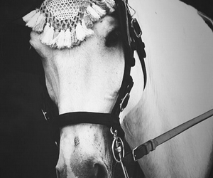 horse, animals, and beauty image