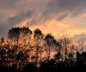 shades, sunset, and trees image