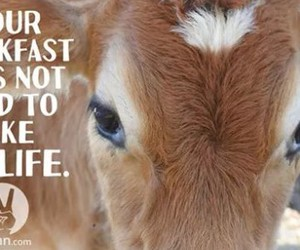 quote and vegetarian image