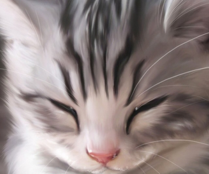 kitten, cute, and animal image