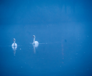 birds, blue, and D700 image