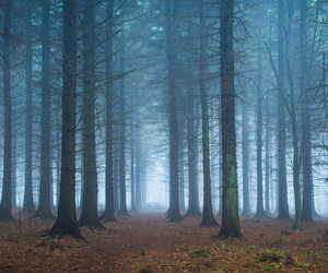 derbyshire, forest, and mist image