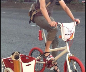 pug and friends image