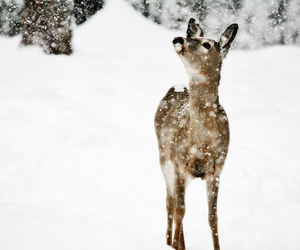 aww, deer, and winter image