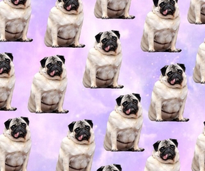 dog, background, and pug image