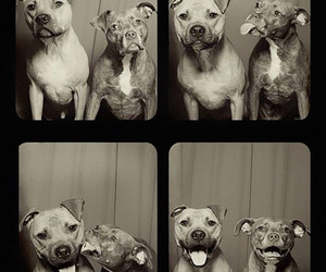 photobooth, smile, and dogs image