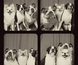 dogs, adorbs, and photobooth image