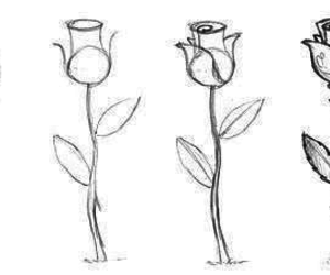 drawing, rose, and tutorial image