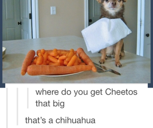 funny, carrot, and Cheetos image