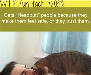 cat, funny, and wtf fun fact image