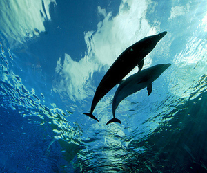 dolphin, ocean, and sea image