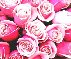 anniversary, pink, and roses image
