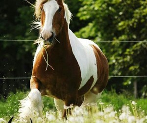 horse, lo, and outside image