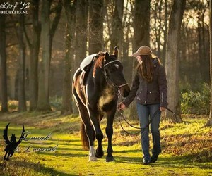hd, horse, and lo image