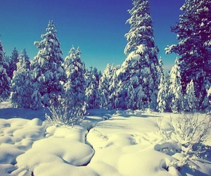 christmas, new year, and winter image