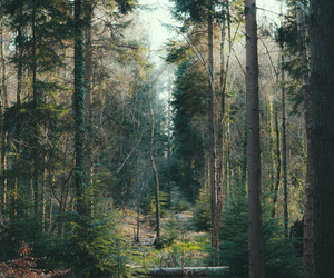 forest, nature, and indie image
