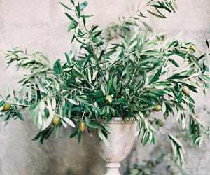 nature, olive, and plants image