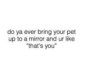 funny, mirror, and pet image