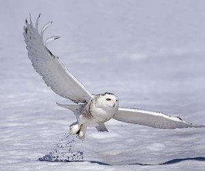 owl and white image