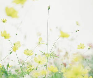 indie and yellow image