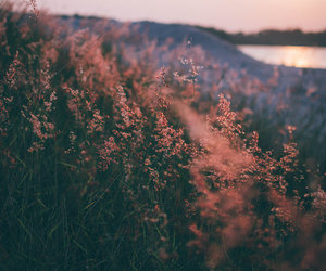 colors, flowers, and indie image