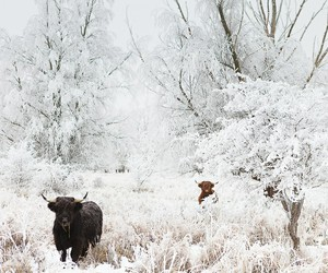 animals, christmas, and forrest image