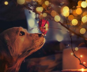 christmas, dogs, and happy image