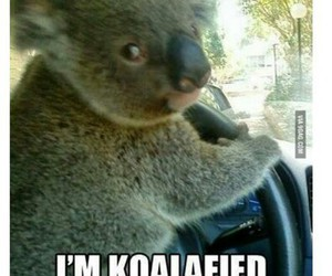funny, Koala, and cute image
