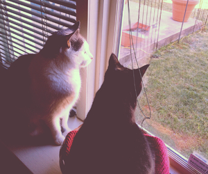 cats, grunge, and hipster image