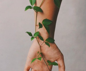 hand, nature, and leafs image