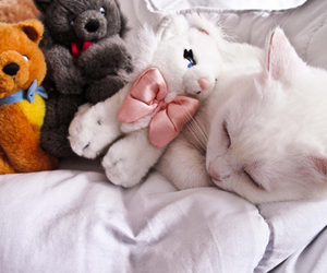 cat and cute image