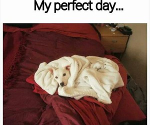 animal, cozy, and funny image