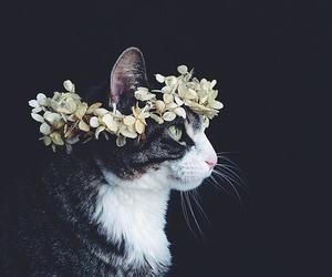 cat, flower headband, and tumblr image