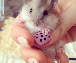 amazing, day, and hamster image