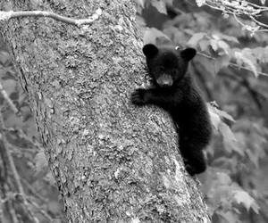 bear, cub, and photography image