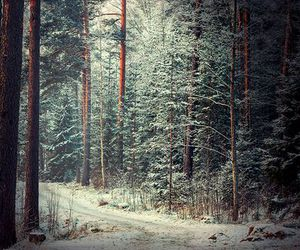 snow, forest, and cold image