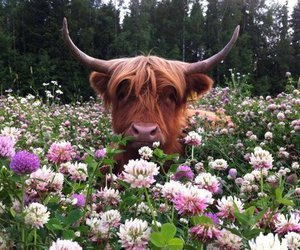 flowers, cow, and nature image