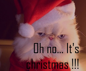 cat, christmas, and crazy image
