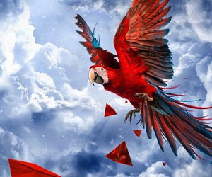 clouds, parrot, and red image