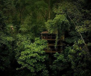 green, tree house, and costa rica image