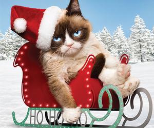 grumpy cat and cat image