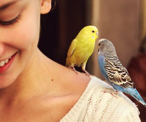 girl and bird image