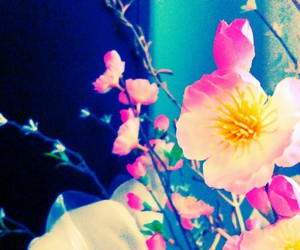 artsy, nature, and flower image
