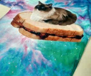 cat, cats, and food image