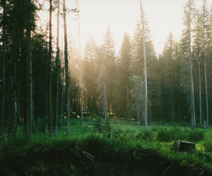beautiful, trees, and forest image