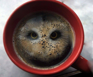 owl, coffee, and cup image