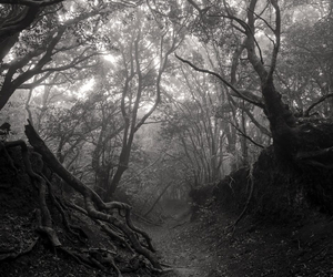 forest, nature, and black and white image