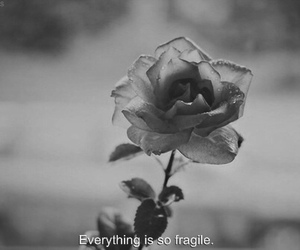 black and white, fragile, and quote image